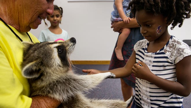 """Hattie Baudin, 4, right, touches Trouper the Blind Raccoon while his caregiver, Miss Dorothy """"Dot"""" Lee, 71, holds him during a presentation at the Marco Island Library on Thursday, Sept. 22, 2016, in Marco Island. Miss Dot, a licensed wildlife rehabilitator, and Trouper visit children and adults all over Florida in schools, groups and organizations to teach about respect and love for all living things."""