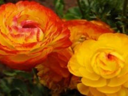 FlowerEssences-300x134.jpg