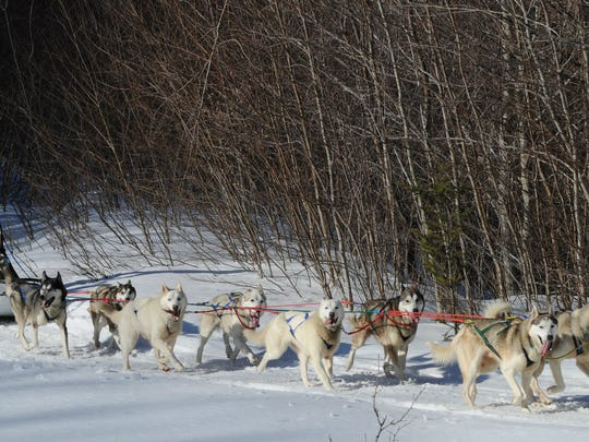 """A dogsledding excursion can be a relaxing experience. """"All you hear are the dogs feet in the snow and the sled gliding over the snow surface,"""" said Peace Pups owner Ken Haggett. """"Our rides are very smooth due to the fact that I groom our tour trail on a daily basis."""""""