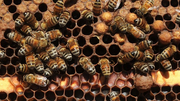 The Red River Beekeepers will meet March 21.
