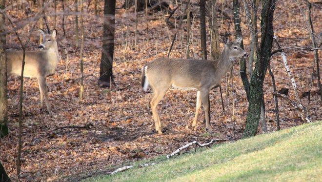 Deer hunting permits went on sale Aug. 1 in Minnesota.