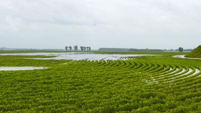 A wet spring delayed planting of soybean crops, among others.