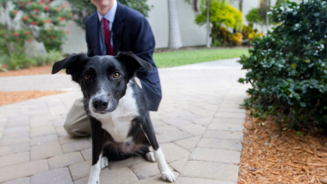 Aero is the fourth bird dog to be used in the Wildlife Management Program at Southwest Florida International Airport.