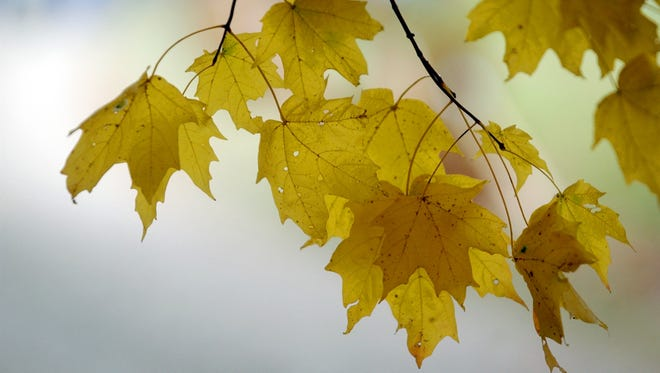 Equipment failure has stopped leaf collection in Liberty.