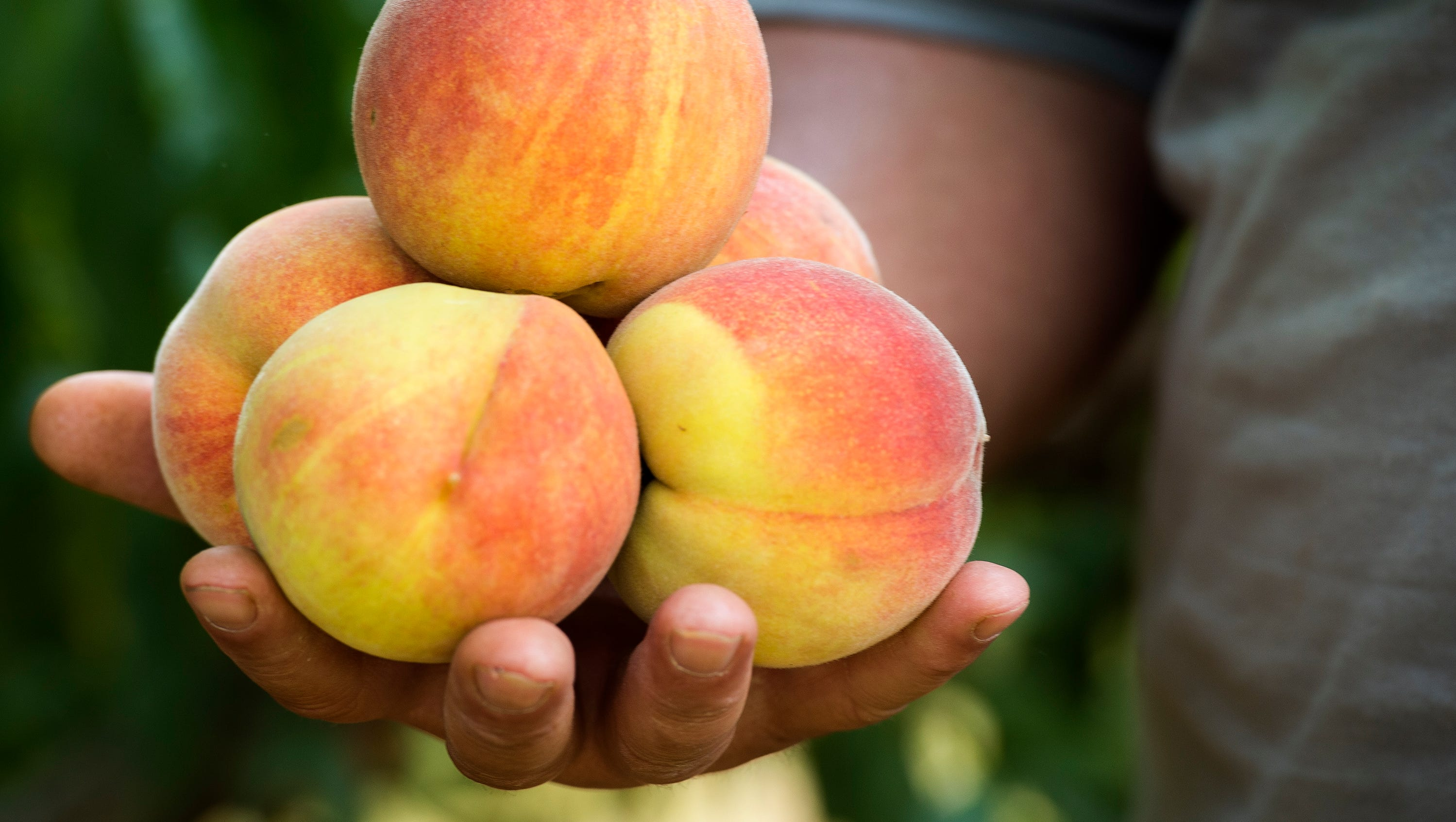 Letter: Love those SC peaches? Better think about climate change - Greenville News