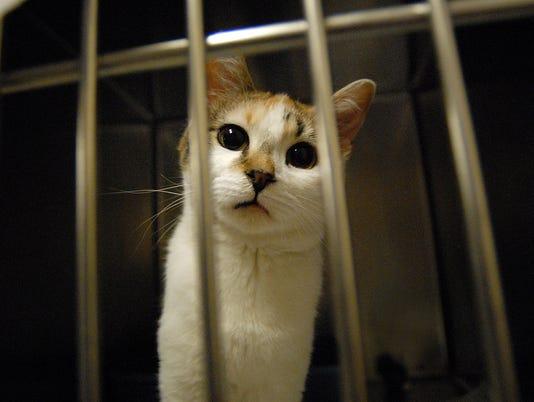 KittyPalooza