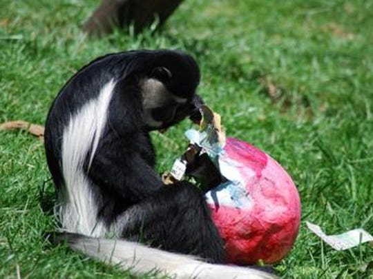 Dickerson Park Zoo will celebrate National Zoo Lovers Day and its Enrichment Eggstravaganza on Sunday.
