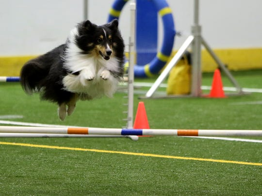 Colt takes a jump as he competes in the Obedience Training