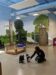 This August photo provided by Bigger Road Veterinary Center for Pet Health and Enrichment shows the adult Montessori and day care area at the facility in Springboro, Ohio. Dogs enrolled in the program have several play sessions and individual sessions every day. They also get a nap and snack time.