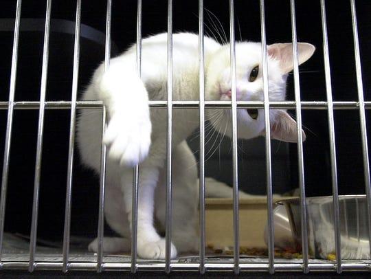 Larimer Humane Society will be hosting an adoption