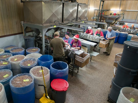 Workers process pecans at the J.W. Renfroe Pecan Co. in Pensacola on Thursday, Dec. 21, 2017.
