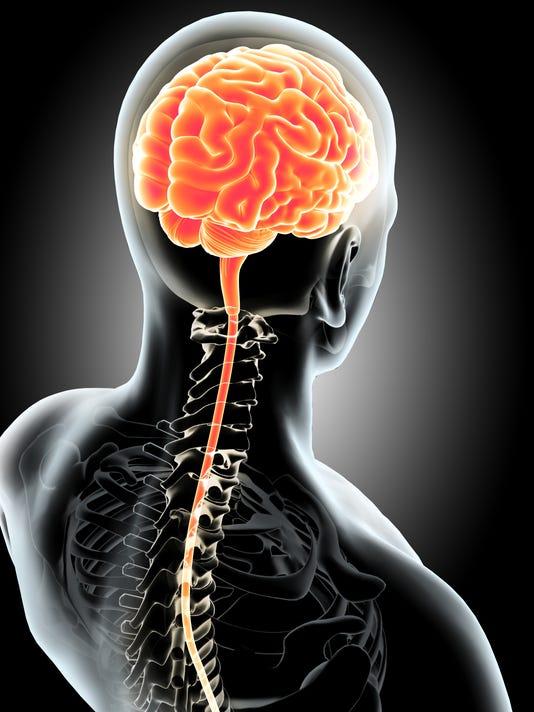 Human Internal Brain