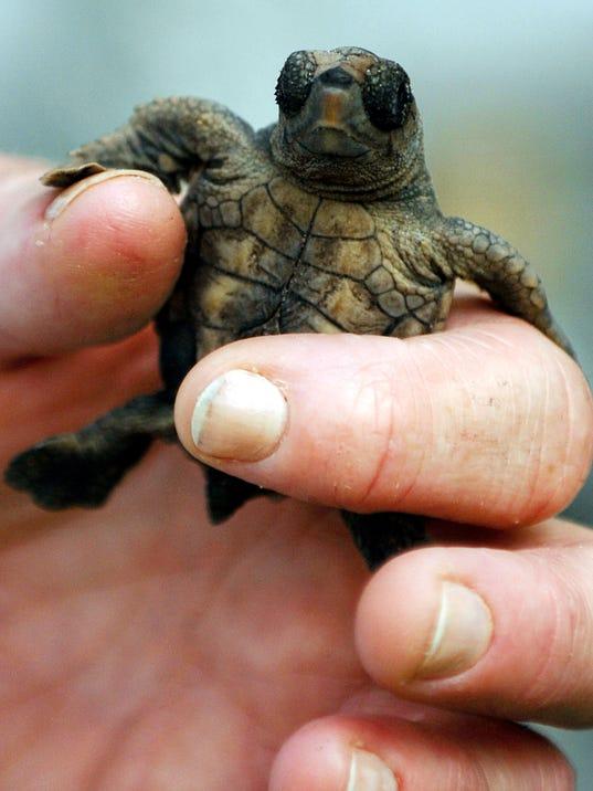 635750622230887967-PNJBrd-07-23-2012-NewsJournal-1-A001--2012-07-22-IMG-Random-cute-turtle-p-2-1-551TIFG9-IMG-Random-cute-turtle-p-2-1-551TIFG9