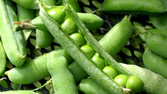 Fresh shell peas from the garden are likely to convert any pea-hater out there.