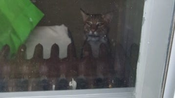 A bobcat entered a Washington Township home this week, trapping a family inside.