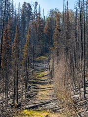 This June 30, 2017 photo shows an area just north of Brian Head, Utah, that was burned by the Brian Head fire. Residents were allowed to move back into Brian Head now that the Brian Head fire no longer threatens the town.