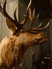 An elk hunting mount hangs on the wall of Joe and Judi