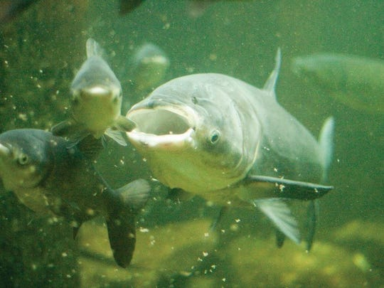 Hunting and fishing groups have teamed up to support a plan for preventing Asian carp from reaching the Great Lakes. They have formed the Great Lakes Conservation Coalition, which will push for funding of a strategy proposed by the U.S. Army Corps of Engineers