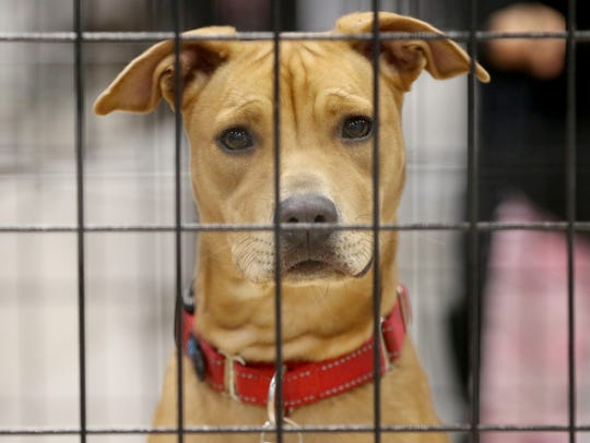 Abby, of Posh Pets Long Beach Animal Shelter, was one