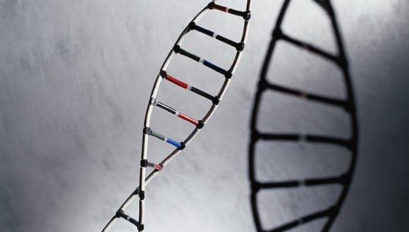 XXX XXX DNA