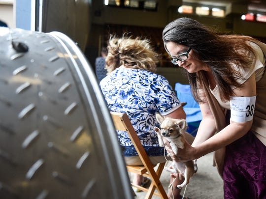 Not all dogs competed in the competitions. Here, Patricia Duffer cools off her 19-week-old long-haired chihuahua, Jenny.
