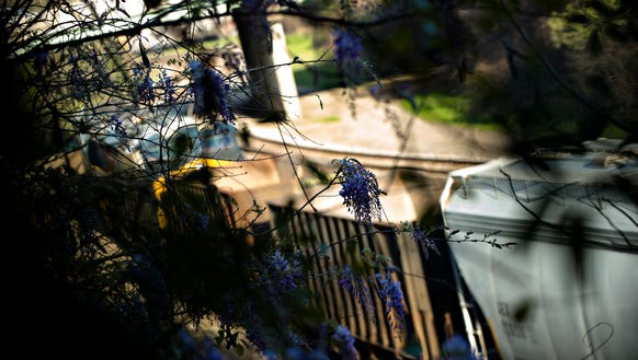 A CSX train rides past some blooming wisteria in Montgomery,