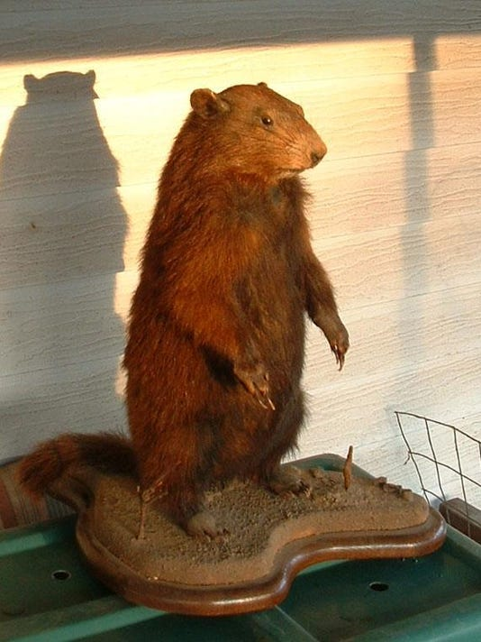 Susquehanna Sherman, another stuffed groundhog, also disagreed with Phil.
