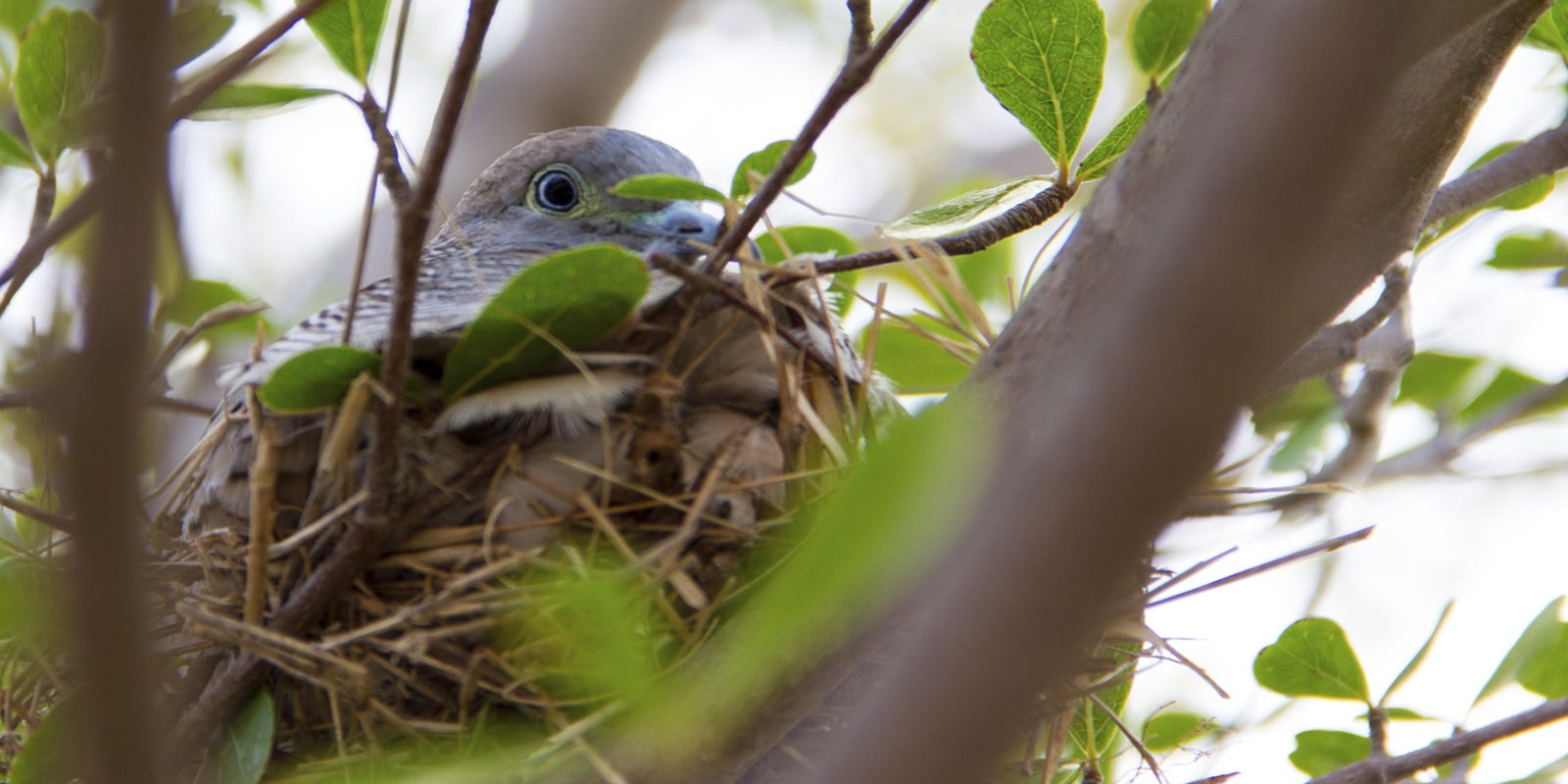 Birds Produce Amazing Architectural Feats With Nests