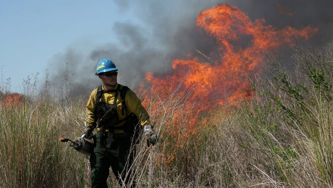 JESSIE VEGA/The News-Press... Andrew Clapp, 25 a forestry fire technician sets the brush on fire at The J. N. Ding Darling National Wildlife Refuge,  Wednesday morning February 18, 2008. The fire was part of a controlled burn, a technique used to prevent natural occurring wildfires during the dry season and to promote new growth of the native vegetation while controlling the exotic species of plants.