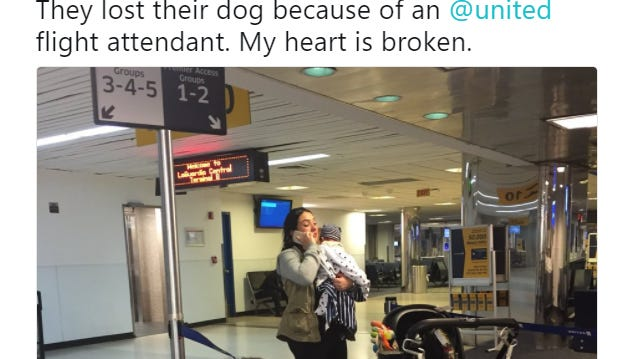 A family is mourning the loss of their bulldog after a United Airlines flight attendant forced the dog into an overhead bin during a three-hour flight.