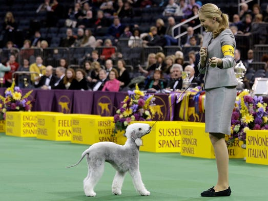how to watch westminster dog show canada