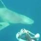 Sharks circle Satellite Beach diver in incredible video