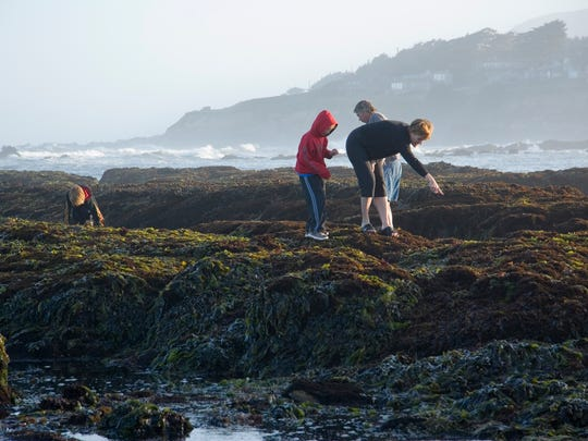 The tide pools of Half Moon Bay are perfect for exploring and observing sea creatures up close in their natural habitat.
