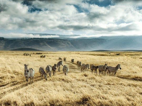 Ngorongoro Crater-Tanzania, Africa