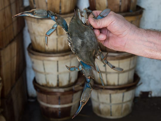 Pat Reese, president of Southern Connection Seafood holds a blue crab on Thursday, April 20, 2017.