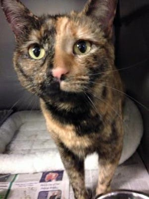 Irene Cata is looking for a loving home after her original owner passed away.