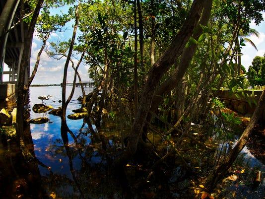 Mangroves 01A.jpg