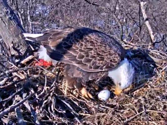 Hanover eagles nest
