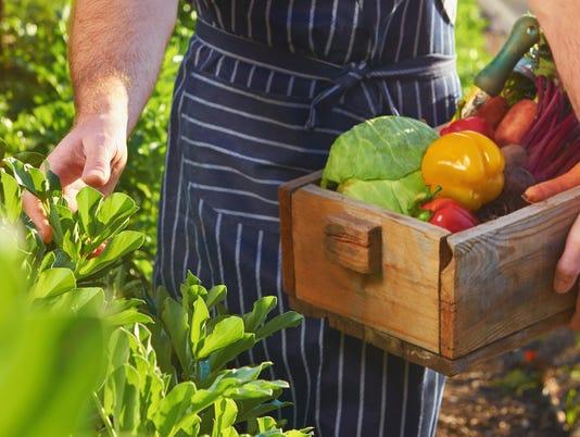Chef harvesting at local organic farm