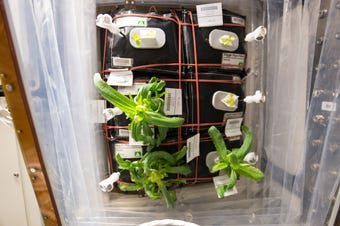 Dr. Trent Smith leads the Veggie project, which lets the ISS crew grow fresh produce in an onboard garden