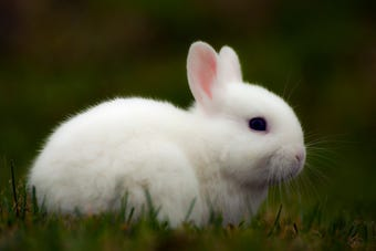 Why are bunnies so popular on Easter?