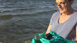 Late-summer beach weather in Vermont can yield potentially toxic cyanobacteria blooms. Produced on Sept. 22, 2017.