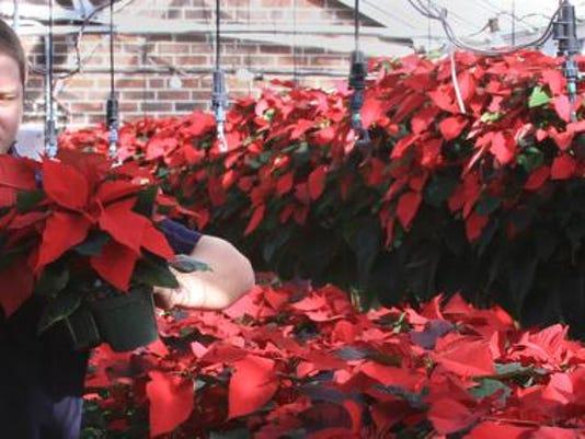 MON Tech Poinsettia Sale 1127002.jpg