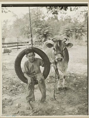 Cows may be among the oldest form of wealth. Domesticated far back in human antiquity, they provided meat and dairy products, and also served as draft animals. In parts of India today they have great religious significance. (Not so in Indiana.)