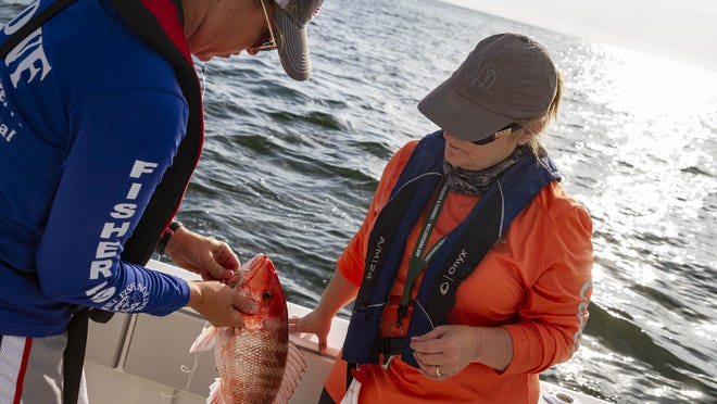 Red snapper season, which has been a hot topic over the past handful of years, will take place mid-July.