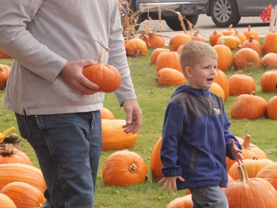 Rooker Stark, 4, took in the excitement at the Grace Methodist Church pumpkin patch Thursday morning.