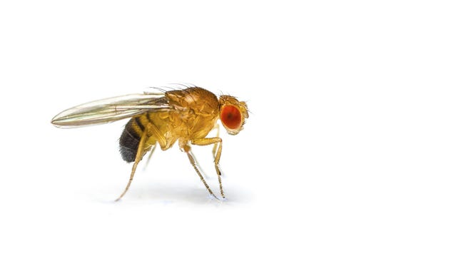 Research on fruit flies has led to a breakthrough discovery about cancer.