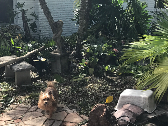 Lisa McGarity evacuated from her home in Naples, Fla. on Saturday with her husband Mark and their two dogs and two birds.