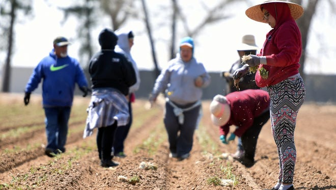 Many agricultural producers struggle to find workers. It's tough work, and the wages for oil and gas or construction are hard to match.