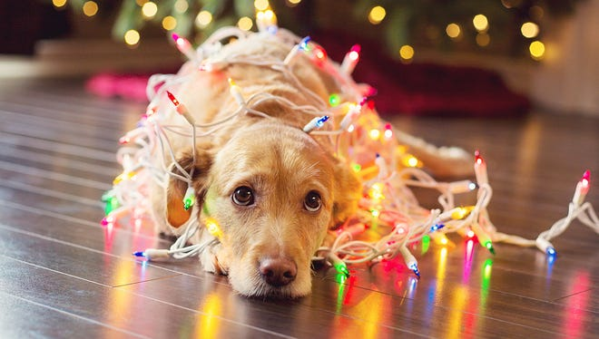 Time to recycle those old Christmas lights?